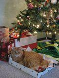 Charlie under Christmas tree